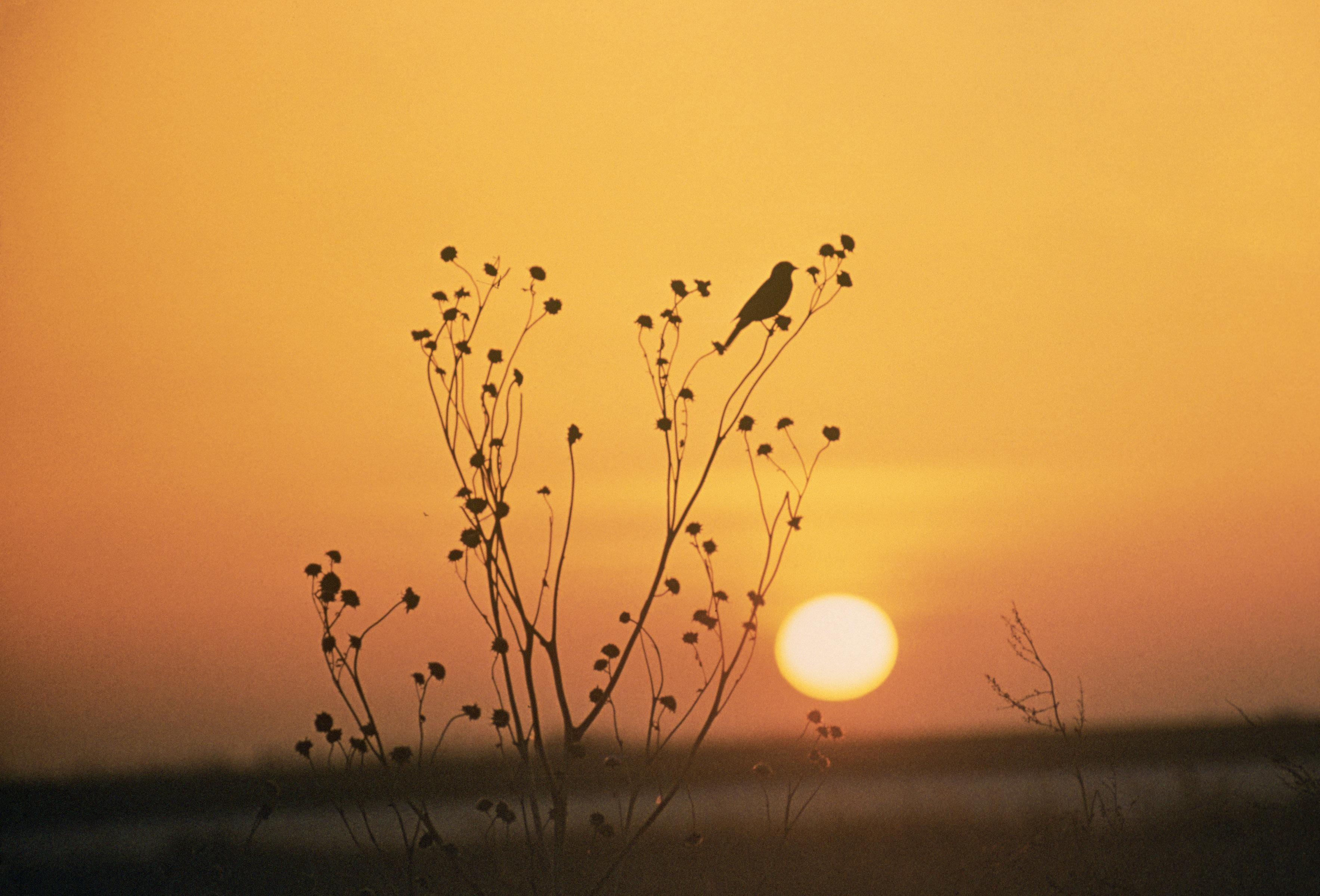 sunset-at-tewaukoa-national-wildlife-refuge