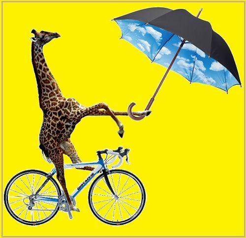 umbrellabicyclegiraffe-500