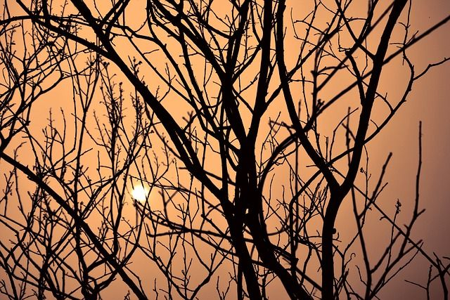 dusk-tree-375988_640