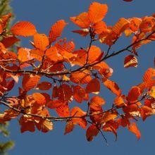autumn-1_640