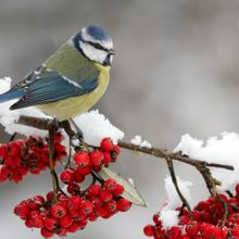 winter-scene-bird