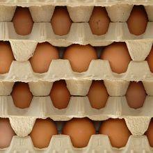 eggs-5814_640