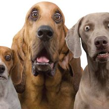 Hilariously-Surprised-Dogs