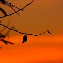 silhouette-251693_640(1)