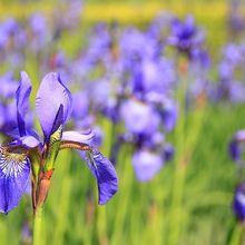 flower-76336_640