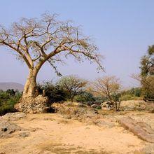 tree-164643_640