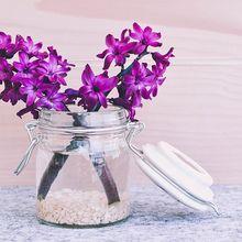 hyacinth-747157_640