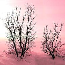 trees-winter-sunset