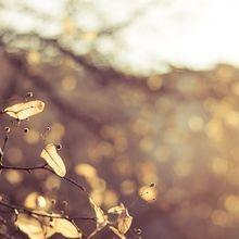 autumn-226450_640