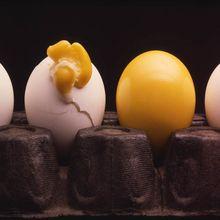 RobertBrusca_Egg