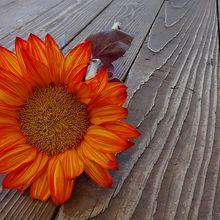 sunflower-187985_640