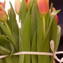 tulips-93836_640