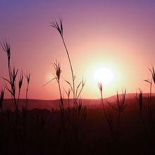 sunset-546370_640