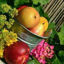 fruits-850491_640