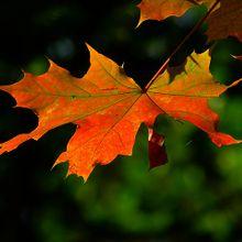 autumn-196566_640