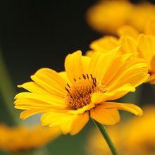 flower-419451_640