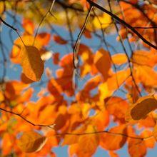leaves-228106_640