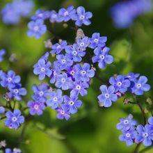 flower-64118_640