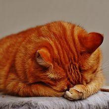 cat-1675428_640