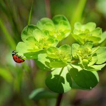 ladybug-250425_640