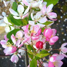 spring-57131_640