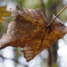 falling-leaf-691524_640