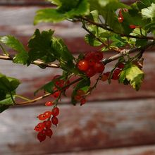 john-berry-162521_640