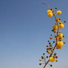 flower-612821_640