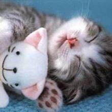 cute-sleepin-7__big