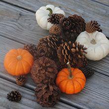 pumpkin-505302_640