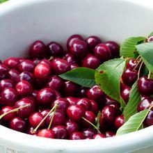 cherry-167359_640
