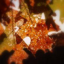leaf-1019517_640