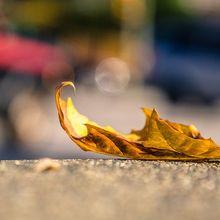 leaf-1082118_640