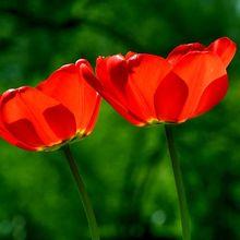 spring-739215_640