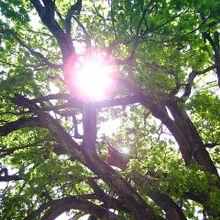 tree-255334_640