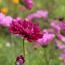 flower-408833_640