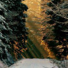 winter-270160_640