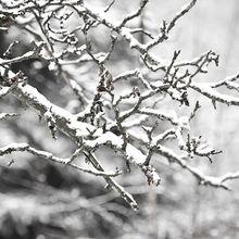 snow-949595_640