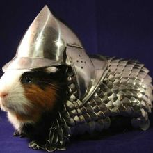this-is-the-best-picture-of-a-guinea-pig-in-armor-youll-see-all-day