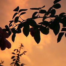 orange-sky-183027_640