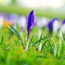flowers-164965_640