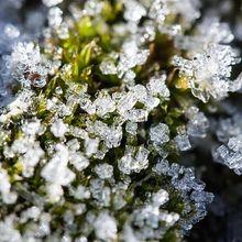 snow-moss_640