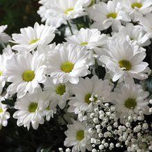 flowers-200602_640