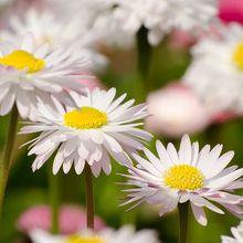 flowers-165047_640