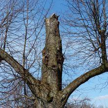 tree-100404_640