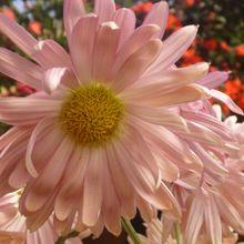 1278-blooming-flower