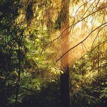 sunlight-933001_640