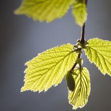 leaves-75214_640