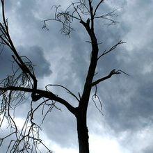 stormy-sky-183576_640