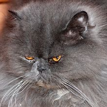 cat-574276_640